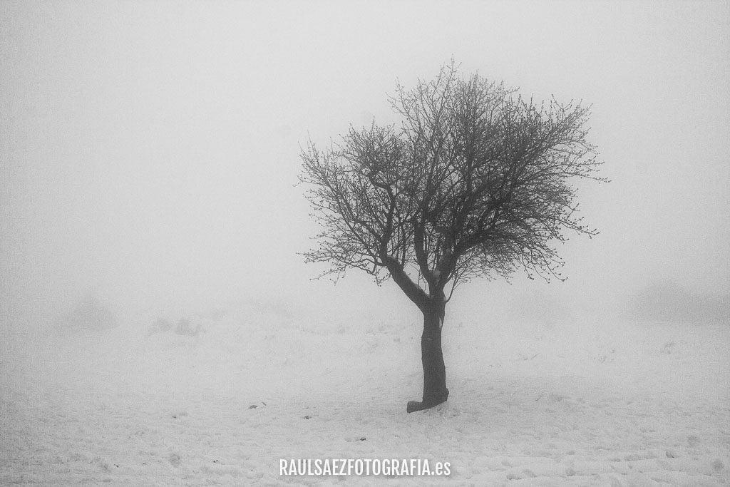 Aparicion entre la niebla 3