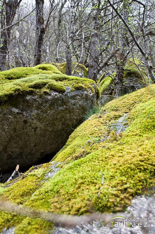 Rocas fertiles 6