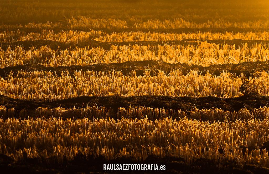 Campos segados a la luz del fuego