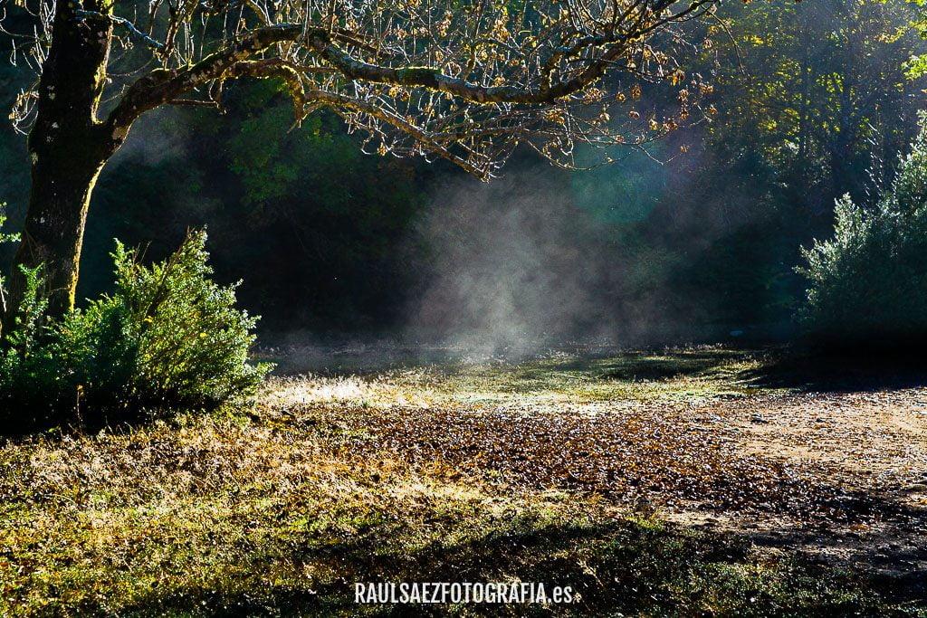 Neblinas al amanecer 2