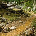 Sigue el camino de hojas amarillas