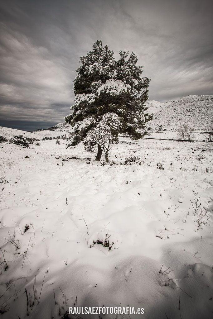 Año de nieves 22