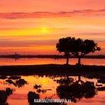 Amanecer en los arrozales de la Albufera